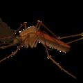moustique paludisme