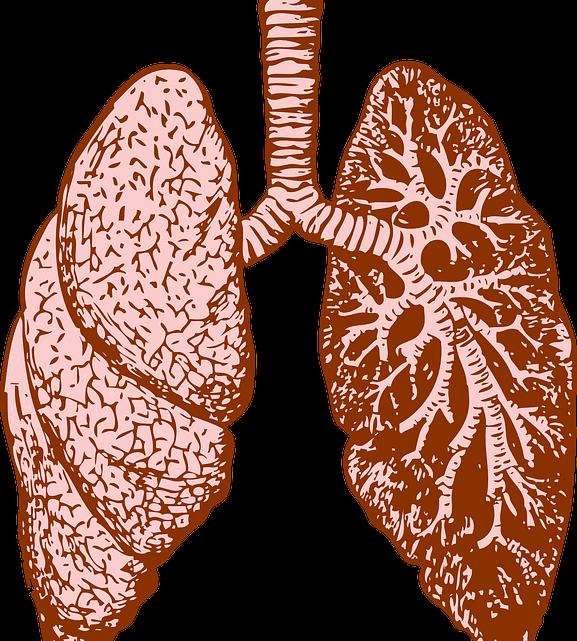 La santé des poumons, pour une respiration saine et assurée