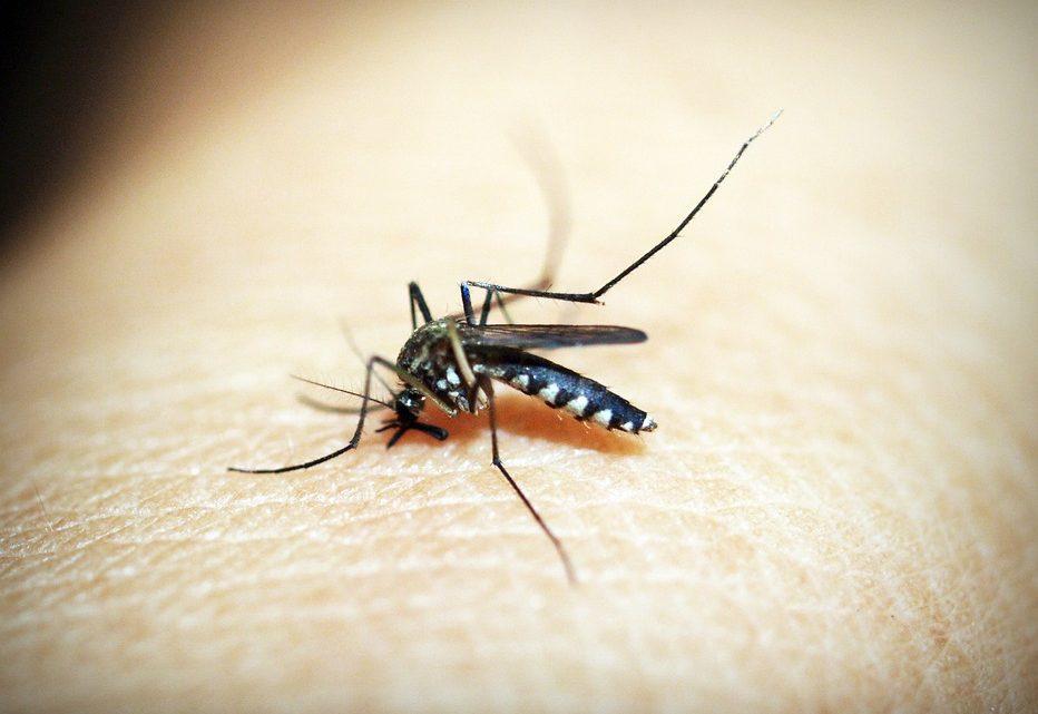 Le paludisme: une maladie récurrente