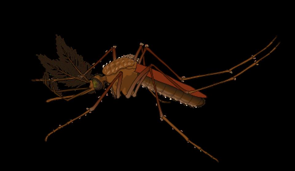Les facteurs environnementaux dans le procès d'acquisition du paludisme