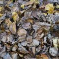 aspireteur feuilles
