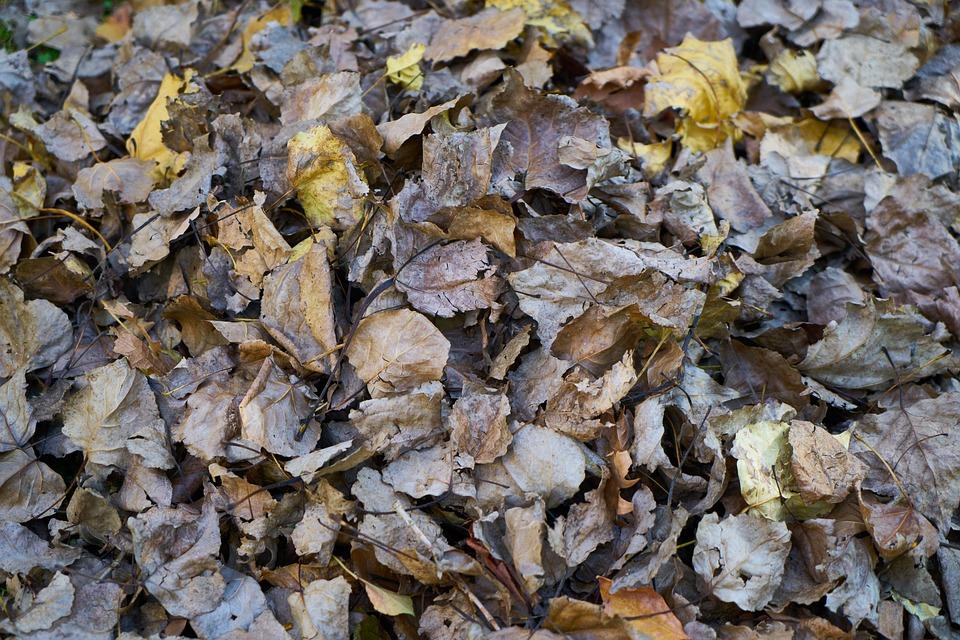Vous en avez marre des feuilles dans votre jardin, nous avons la solution